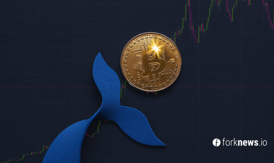 Santiment: Bitcoin whales have bought a record number of BTC